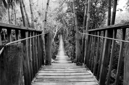 Looking out across a wooden suspension bridge in a subtropical environment in southwest florida.