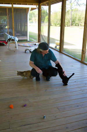 humane: A man is squatting on a large porch petting stray cats at an animal shelter in Ft Myers FLorida. Stock Photo