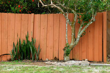 florida citrus: Backyard garden in Bonita Springs Florida showing wooden fence wall, orange citrus tree and mother in law tongue plant. Stock Photo
