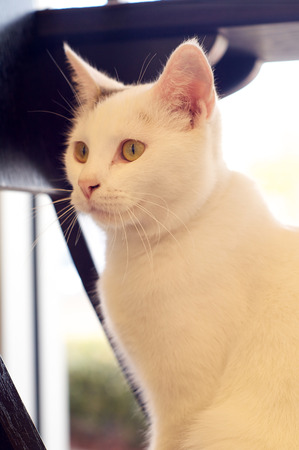 A white cat with grey markings is sitting looking to the left.