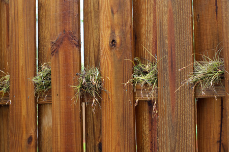 stockade: A wet wooden stockade fence with air plants growing on the cross beam on a rainy day. Stock Photo