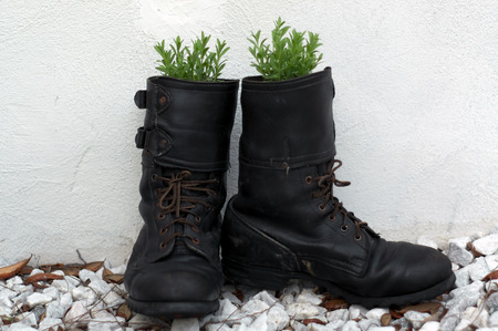 army boots: A pair of old army boots are outside against a white wall and have been turned into flower pots with lavender growing in them. Shallow depth of field. Stock Photo