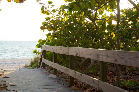 gulf of mexico: A raised wooden boardwalk with railings leads to the beach in bonita springs florida, with gulf of mexico in distance and sea grapes growing.