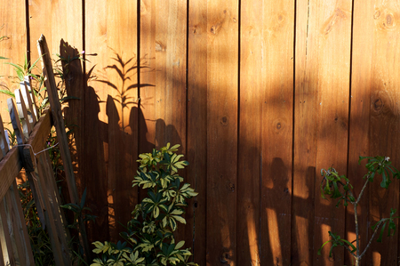 stockade: The morning sun is casting shadows of a picket fence onto a stockade fence with umbrella and plumeria plans showing with copy space in the upper right.