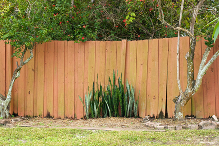 stockade: An old uneven wooden stockade fence with citrus trees on either side and snake plant in the middle in Bonita Springs, Florida.