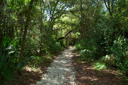 View of a shaded gravel walkway though a subtropical forest in Bonita Springs Florida.