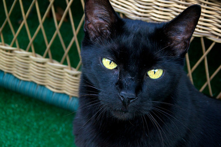 Close up of a black cats face looking up at viewer.