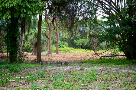 Looking into a subtropical wilderness scene in Bonita Springs, Florida. Banco de Imagens