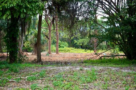 subtropical: Looking into a subtropical wilderness scene in Bonita Springs, Florida. Stock Photo