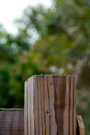fence post: Looking towards the top of a 4 by 4 wooden fence post.