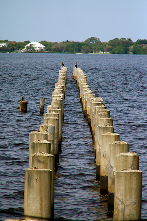 diminishing perspective: Looking out towards an abandoned boat dock where only the concrete pylons still exist, two rows with diminishing perspective with a cormorant bird at the end of each row.