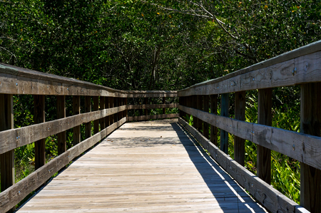 subtropical: Looking down the length of a wooden boardwalk surrounded by subtropical vegetation on a sunny day in Bonita Springs Florida.