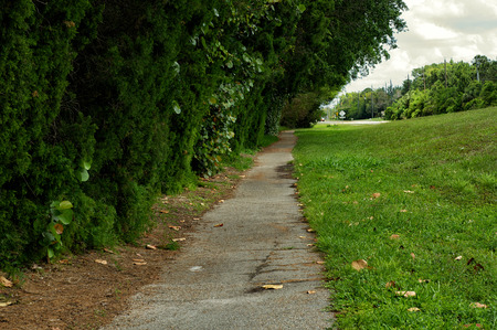 incline: Looking down along an old broken paved, pathway, or walkway, with trees overhanging and slight incline.