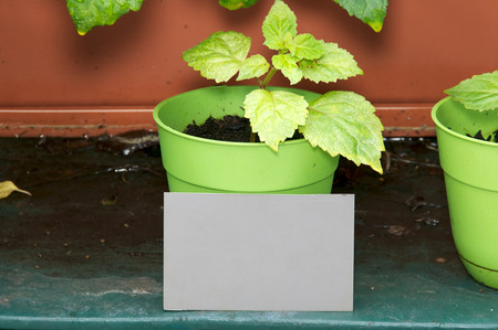 behind the scenes: A behind the scenes look at a grey card positioned to help with exposure and white balance, Grey card is in front of potted plant in garden.