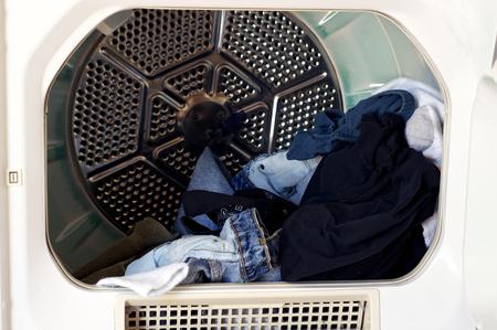 Patrząc na front loading suszarki do ubrań z suszonej bielizny. Zdjęcie Seryjne