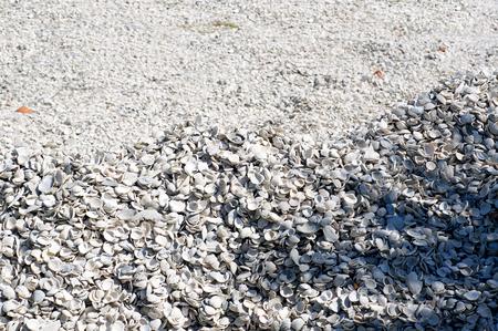 gulf of mexico: A large mound of seashells on Bonita Beach at the Gulf of mexico in Bonita Springs Florida Stock Photo