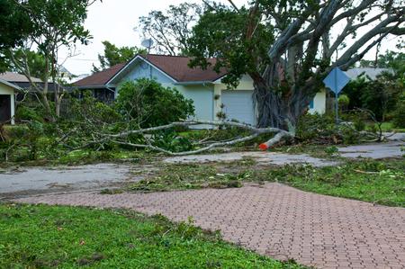 Vista de árboles caídos frente a casa y daños por huracán irma en florida. Foto de archivo