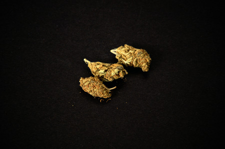 three buds of cannabis on black background. Used as a recreational drug and also alternative medicine. Stock Photo