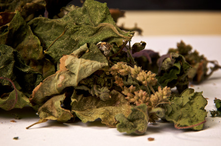 Detailed close up view of large pile of dried patchouli leaves and flowers. Used for perfume and incense. Member of deadnettle mint family. Banco de Imagens