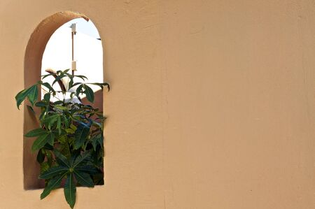 A blank Spanish style orange stucco wall with arched window and large green money plant growing. copy space. Banco de Imagens
