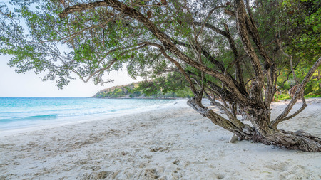 Trees on White Sand Beach of Samet Island, Rayong, Thailand.