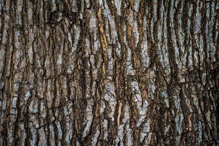 Brown bark of big trees.