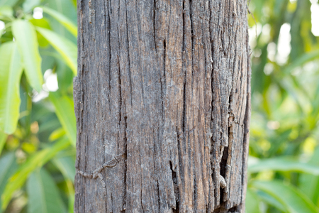 Old wooden pole
