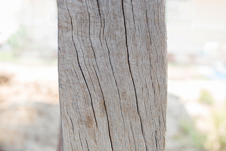 Old Wooden Pole on the garden.