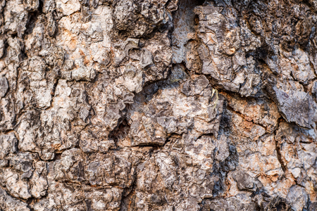 bark of a rugged tree is brown. Banco de Imagens