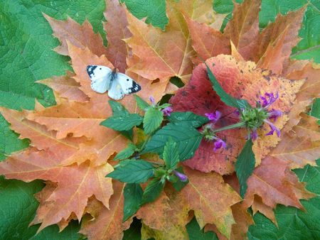 Butterfly on yellow autumn leaves and flowers