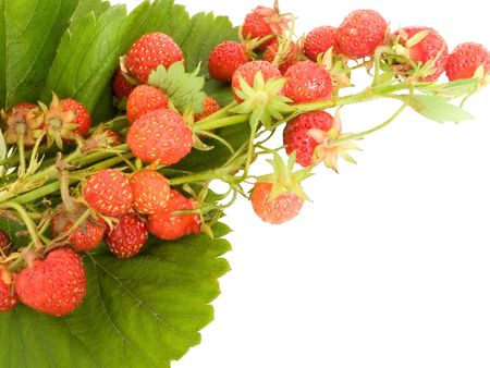 ripe, juicy strawberry on leaves   Stock Photo