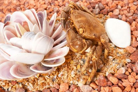Sea crab. Marine cockleshells, crab on a background sea pebbles Stock Photo