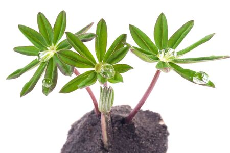 green young plants on the white backgrounds Stock Photo