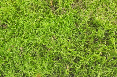 background from green forest moss Stock Photo - 7964094