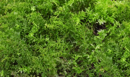 Green background. Background from green forest moss Stock Photo - 7964093