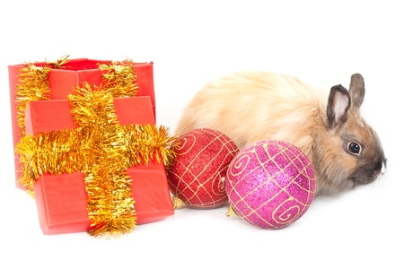 Christmas and new-year decorations.  Rabbit and red giftbox and varicoloured   ball composition on a white background photo