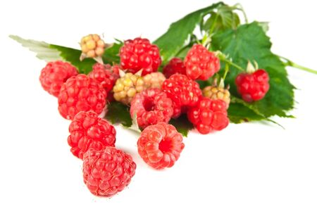Red raspberries on leaves over white background