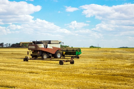 cutting: Kombain collects on the wheat crop. Agricultural machinery in the field. Grain harvest.