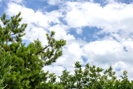 over the edge: Blue sky with clouds and Pine trees green meadows