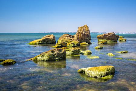 Green algae on the sea shore and stones