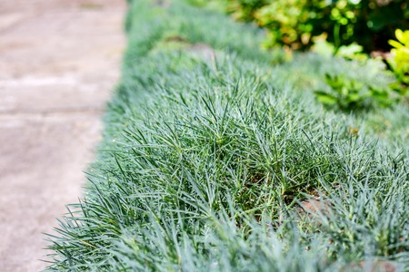 garden design Stock Photo