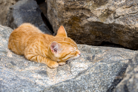 Cat sleeping peacefully in the sun on a stone on a beach, in sunny day