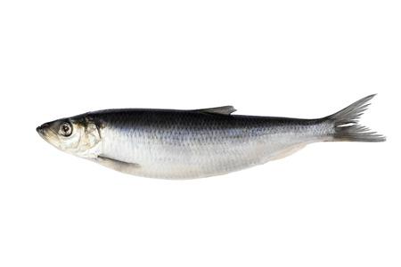haring op witte achtergrond wordt geïsoleerd die. Vis van verse haring.