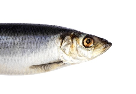 흰 배경에 고립 청 어 물고기입니다. 청 어 물고기 머리를 잘라.
