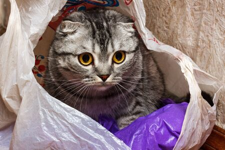 cat in the package at home. curiosity cat.