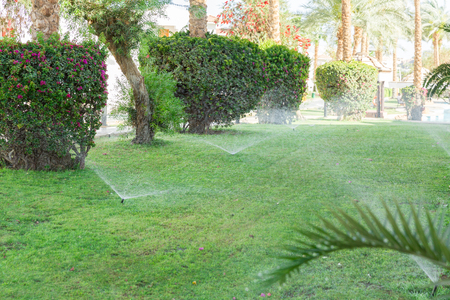 Sprinkler in garden watering the lawn. Automatic watering lawns concept.