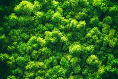 Green moss on old office floor. interior design. top view close up.