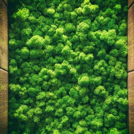 green moss background texture close up Top view interior design.