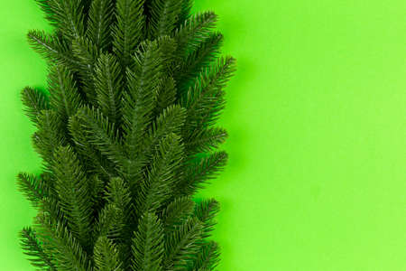 Top view of green fir tree branches on colorful background. New year holiday concept with empty space for your design.