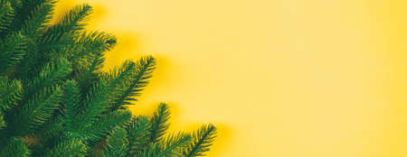 Top view of green fir tree branches on colorful background. New year holiday concept with empty space for your Banner design.